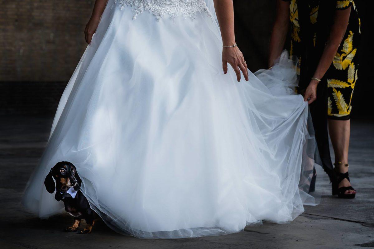 Bruidsfotograaf opgrond liggen hond onder bruidsjurk Bruiloft Utrecht